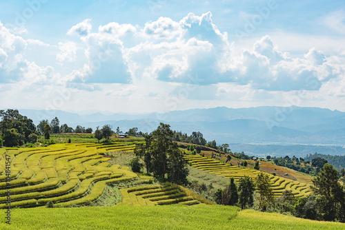 Aluminium Prints Rice fields Rice fields at Ban Pa Bong Piang,Mae Cham, Chiang Mai, The most beautiful rice terrace in Thailand