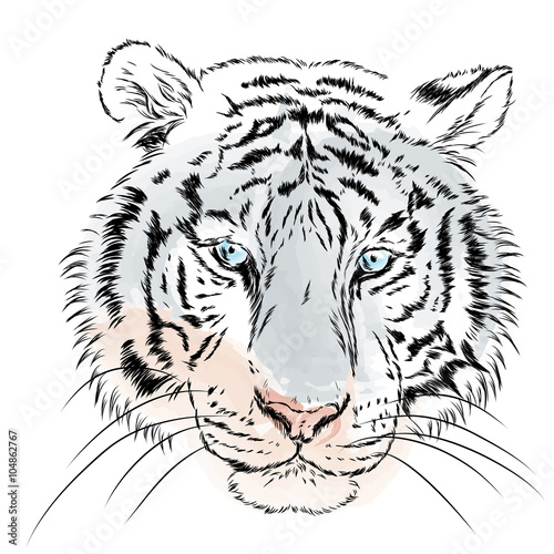 Obraz w ramie Wektorowa głowa tygrysa na białym tle