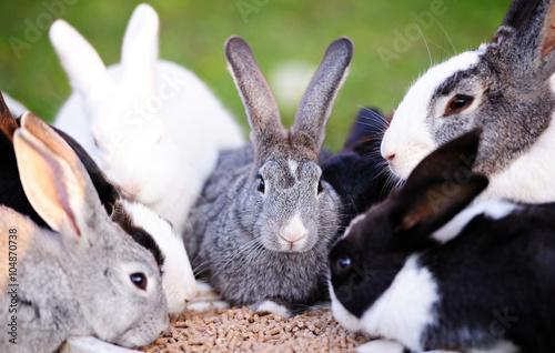 Fényképezés  rabbits eating on lawn
