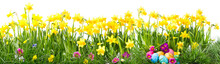 Beautiful Easter Background With Spring Flowers And Eggs Isolated On White Background