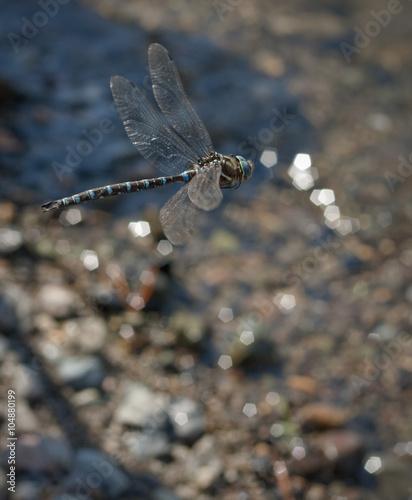 Photo dragonfly mid flight