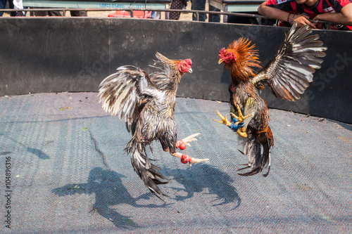 Photo two cocks in fight