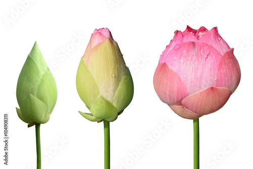 Foto op Aluminium Lotusbloem Beautiful pink lotus flower 3 style isolate on white background