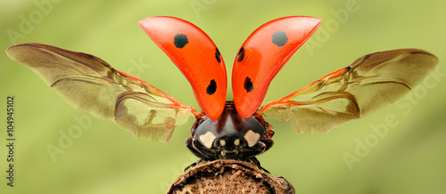 Photo  Extreme magnification - Lady bug with spread wings
