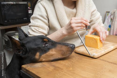Fotografie, Obraz  チーズを切る女性と見つめるドーベルマン