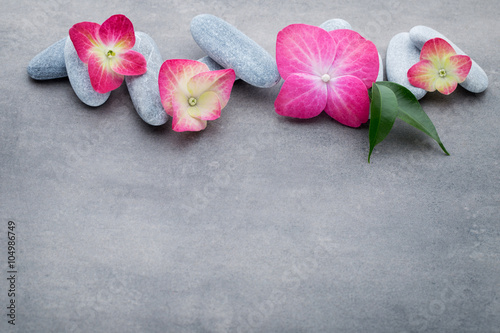 Juliste  Spa stones and flowers, on grey background.