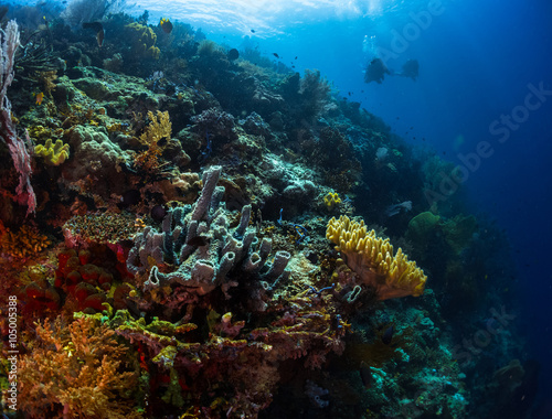 Poster Coral reefs Coral reef