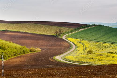 Photo sur Aluminium Cappuccino Road in Moravia hills in April. Spring fields