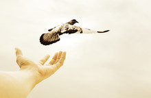 Hand Releasing Bird Into The Air