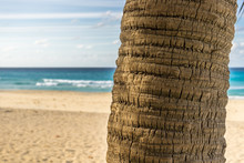 Palm Tree, Trunk In Front Of A Beach