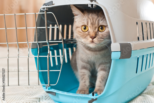 Cat inside pet carrier