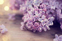 Lilac Spring Flowers Bunch Over Wooden Background
