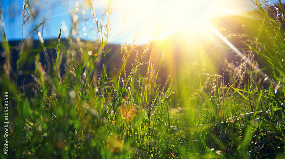 Fototapety, obrazy: Beautiful nature landscape - Alpine meadow