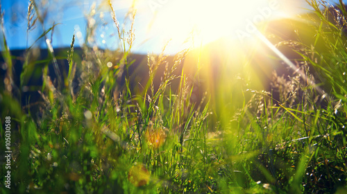 Spoed Foto op Canvas Weide, Moeras Beautiful nature landscape - Alpine meadow