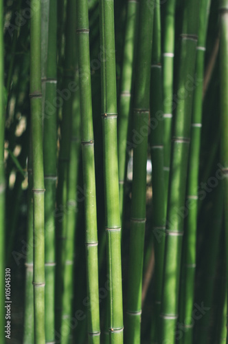Foto op Canvas Bamboo Green bamboo - background