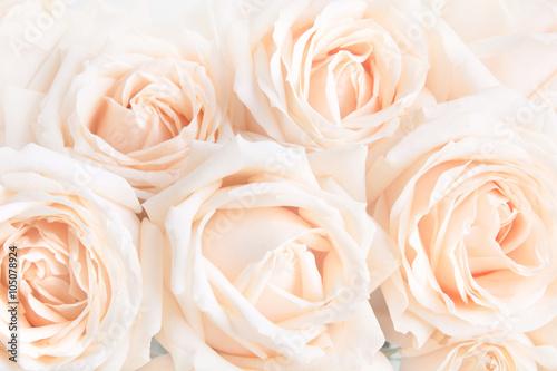 delikatne-delikatne-roze-jako-neutralne-tlo-selektywna-ostrosc