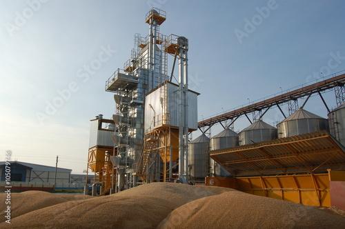 Fototapeta Grain production obraz