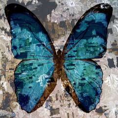 Fototapeta Motyle grunge butterfly