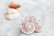 Shell. Shell on the beach. Sand and shell - background.