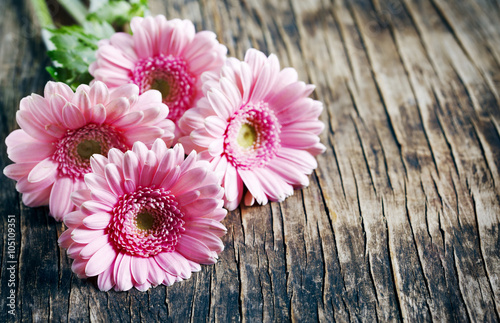 Beautiful pink gerbera flowers