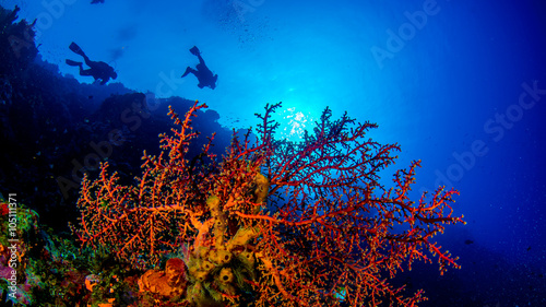 Spoed Foto op Canvas Duiken Unterwasser