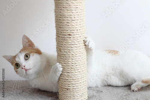 Keuken foto achterwand Kat Red and white cat and scratching post