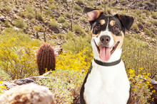 Happy Dog Hiking In Arizona Desert