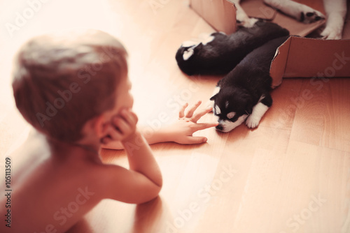 Fotobehang School de yoga baby boy plays with a very beautiful husky puppy at home
