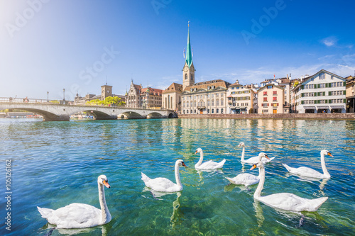 Poster Cygne Zürich city center with swans on Limmat river, Switzerland