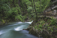 Flowing River In The Forest, L...