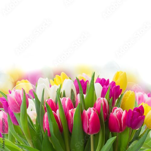 Foto op Plexiglas Tulp bouquet of pink, purple and white tulips