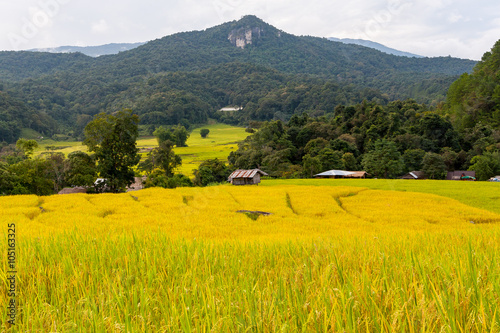 Staande foto Rijstvelden Green and yellow step/terraced rice field with hut in Chiangmai, Thailand
