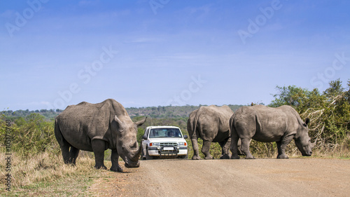 Foto op Canvas Zuid Afrika Southern white rhinoceros in Kruger National park, South Africa
