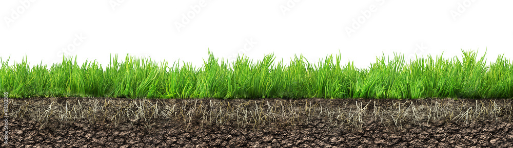 Fototapety, obrazy: grass with roots and soil