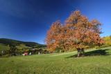 Jesień w Kamiannej