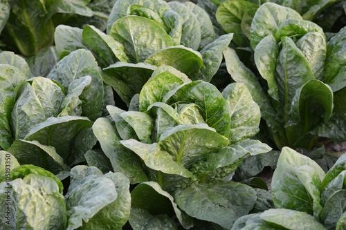Textura vegetal