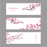 cherry blossom collection , greeting cards , seamless texture ,