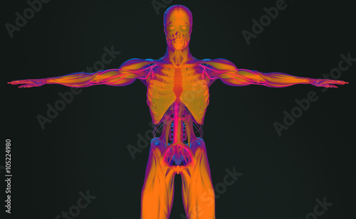 Human Anatomy 3d Futuristic Scan Technology With Xray Like View Of
