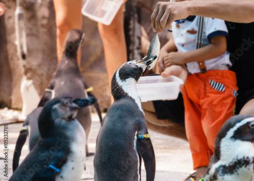 Photo of traveler feeding the penguins in zoo