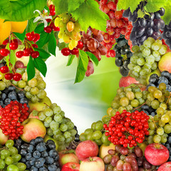 Fototapeta Owoce image of many fruits and berries closeup