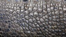 Close Up Texture Of Alligator Skin