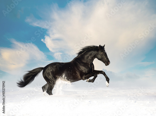 czarny-kon-biegnie-w-sniegu