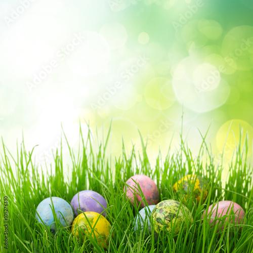 Plakat  Easter eggs in grass