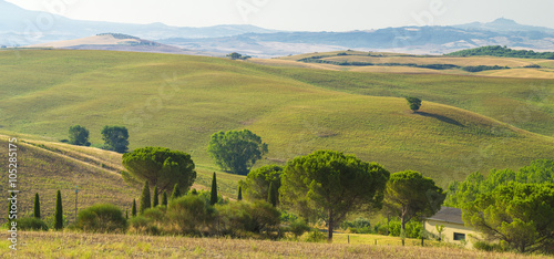 Fotobehang Heuvel view to hills and tree in tuscany in Italy