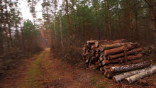 Wooden Log Stacks For Forestry...