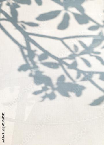 obraz lub plakat shadow of tree