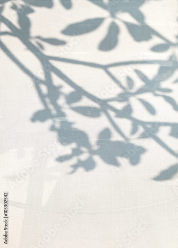 obraz dibond shadow of tree