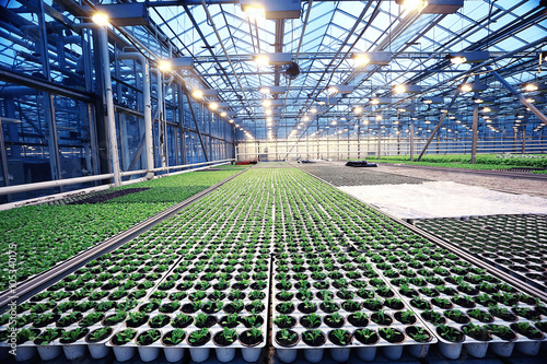 agribusiness greenhouse seedling spring Canvas Print