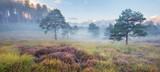 Spring mist in heathland near Wareham, Dorset, England, UK - 105344169