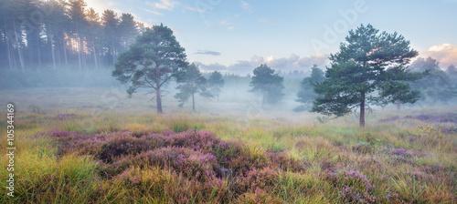 Spring mist in heathland near Wareham, Dorset, England, UK